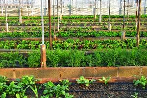 agricultura-urbana-usp