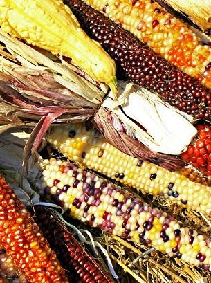 milho-biodiversidade-fapeam